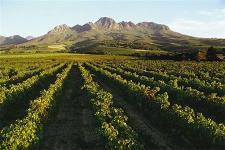 Stellenbosch-wines